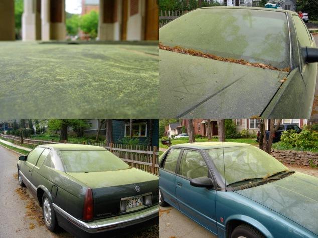 Atlanta, Georgia Pollen: The Yellow Blanket Befalls!